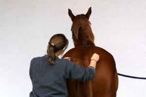 Mobilisationübungen am Pferd