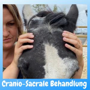 Cranio-Sacrale Behandlung Pferd